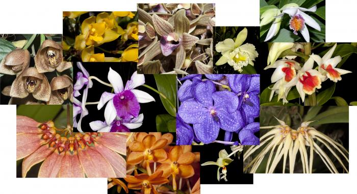 A selection of images of beautiful orchids