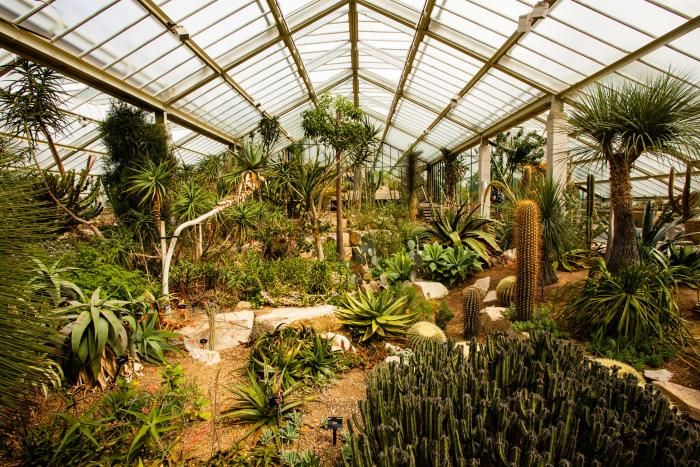 Image showing the Princess of Wales Conservatory at Kew, where species of Aloe and Euphorbia are displayed.