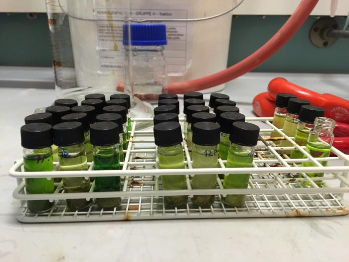 Image showing Euphorbia extracts being analysed for their chemistry