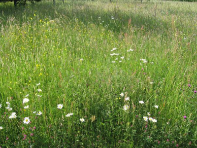 Atlantic meadow on which seed biology research is revealing a variety of environmental triggers to overcome dormancy (Photo: Cristina Blandino)