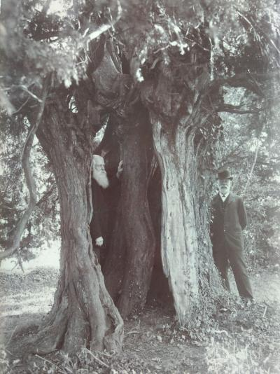 This image of a yew tree is a particular favourite as the positions of the men with the yew tree is reminiscent of a game of hide and seek