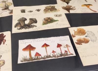 Selection of E M Wakefield fungi sketches