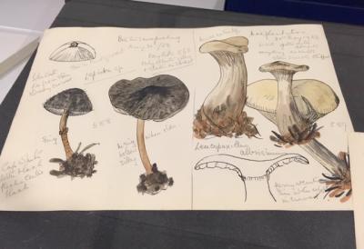 Field sketch by Wakefield