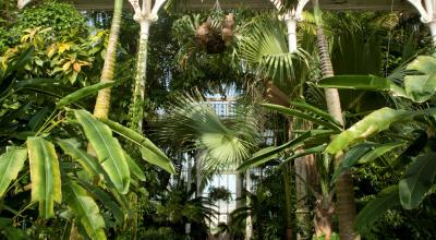 Step inside the tropical wonderland of the Palm House