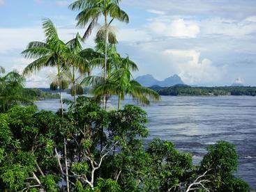 The Rio Negro at São Gabriel da Cachoeira (Image: W. Milliken).