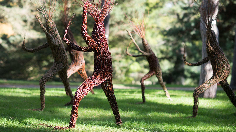 Woodys Treelings performing thai chi